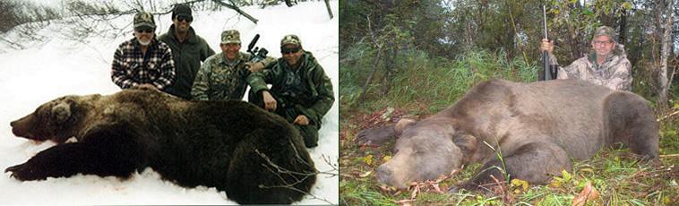 Alaska Guided Brown Bear Hunts, Alaska Grizzly Hunting Guides